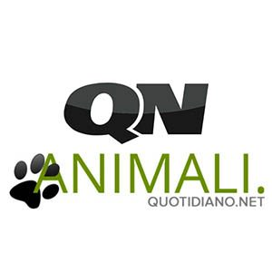Quotidiano Nazionale - Animali
